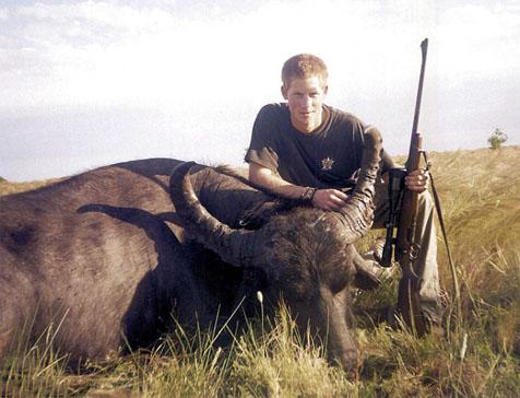 harry-buffalo-022414