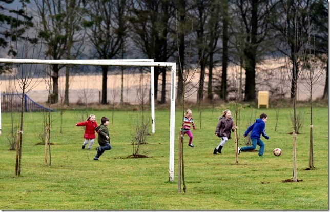 trees%20on%20football%20pitch1